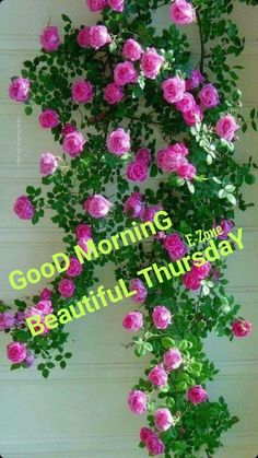 Planting Roses, Good Morning Messages, Aesthetic Art, Beautiful Roses, Floral Wreath, Wreaths, Pearls, Garden, Home Decor