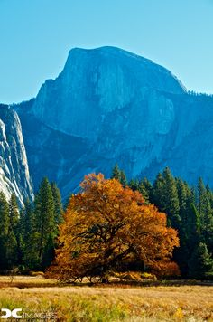 Please vote for this entry in Share your favorite Yosemite experience!!