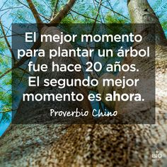 #Frases #Quotes #Inspirational Preverbio Chino