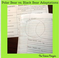 Time to Teach: Animal Adaptations — The Science Penguin
