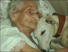 At every age, love is still love. Retired racing greyhounds make great pets. Save the greyhound by not supporting the lobbyists, Instead, support your right to choose pro-greyhound. All Dogs, I Love Dogs, Puppy Love, Dogs And Puppies, Mans Best Friend, Best Friends, Animals And Pets, Cute Animals, Image Couple