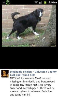 #lostdog #TexasCity #TX #Max lostdog texasc