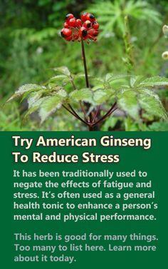 I believe American ginsing is becoming endangered due to so many poachers taking it from forests, and selling to suppliers. But this website has a wealth of herbal information.