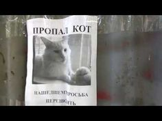 A Redditor took a video of a missing cat poster that appears to turn its head as the video walks by.