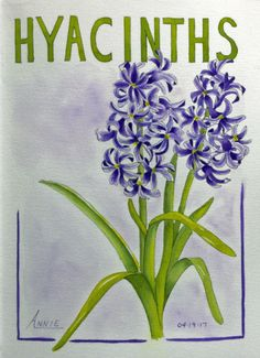Hyacinths in Ink and Watercolor – Sketching and Painting the Moments