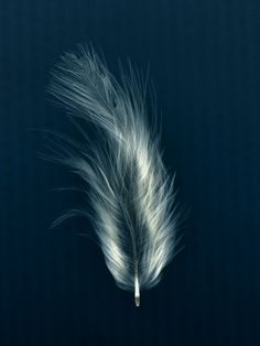Feather. Kath Williamson Watercolor Feather, Feather Art, Feather Photography, Multiple Exposure, Scratchboard, Art For Art Sake, Pastel Art, Pretty Wallpapers, Native Art