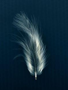 Feather. Kath Williamson