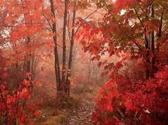 Image result for romantic nature backgrounds