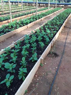 Cute little seedlings! Sustainable Forestry, Forest Stewardship Council, Best Brand, Planting, Stepping Stones, Teak, Organic, World, Outdoor Decor