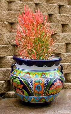 another Mexican Talavera pot with succulent - Euphorbia, Fire Sticks. Container Plants, Container Gardening, Mexican Garden, Talavera Pottery, Pot Plante, Hacienda Style, Cactus Y Suculentas, Cacti And Succulents, Succulent Bowls