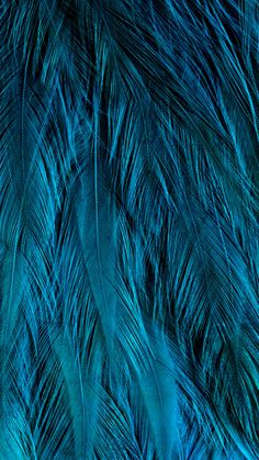 aqua teal turquoise feathers close up Bleu Turquoise, Shades Of Turquoise, Aqua Blue, Shades Of Blue, Blue Colors, Mint Color, Turquoise Stone, Yellow, Tiffany Blue