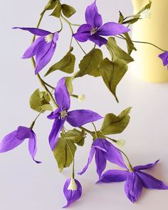 Changing palette with a purple clematis vine  #papetal #clematis