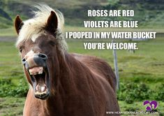 Funny Horse Meme - Equestrian Humor - Funny Horse Poem Roses are Red Violets are blue I pooped in my water bucket You're welcome www.heartequineacademy.com #horse