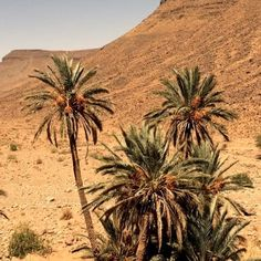 """Morocco...#love #palmtrees #desert #morocco #bakchic"" Photo taken by @bakchic_thelabel on Instagram"