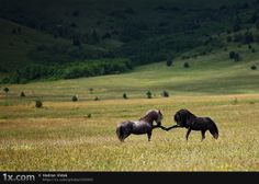 Majestic Horse Photography | Inspiration | Scott Photographics | Free ...640 x 457 | 107.2 KB | www.inspiration.scottphotog...