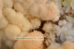 Microscopic view of the icky mold growing on a shower curtain http://www.plumbingguys.com/news/2012/08/preventing-mold-in-tubs-with-shower-curtains/