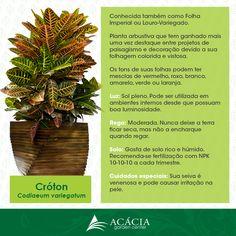 Croton #plantas #plants