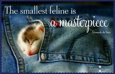 The smallest feline is a masterpiece #cats #kitten #sleep #masterpiece #daVinci