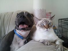 They're always ruining serious pictures: | 24 Reasons Why No One Should Ever Have A Pit Bull As A Pet