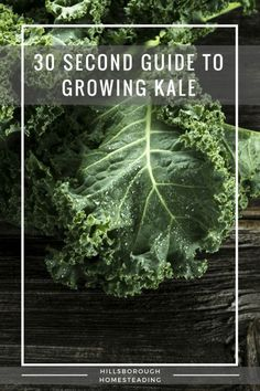 30 Second Guide, Cheat Sheet, Quick Reference Guide to growing kale. Kale is the perfect super food for your homestead garden. Kale Plant, Kale Kale, Organic Gardening, Gardening Tips, Urban Gardening, Urban Farming, Vegetable Garden Tips, Veggie Gardens, Veg Garden
