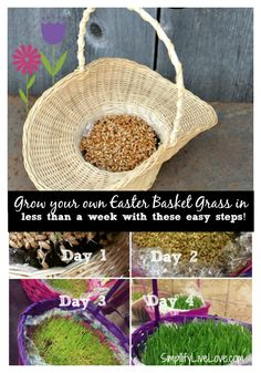 Heres how to grow your own easter basket grass in less than a week heres how to grow your own easter basket grass in less than a week its negle Image collections
