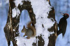 Squirrel by Hannu Hautala