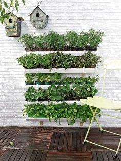 Jardinería en la pared..