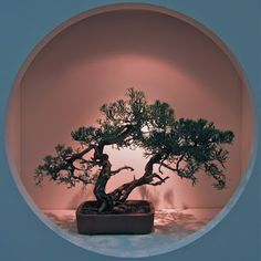 Simply Tree ©PJ Ammidon