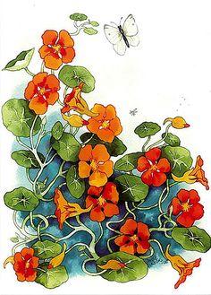 Inge Look Nasturtium by FloridaGirl46, via Flickr