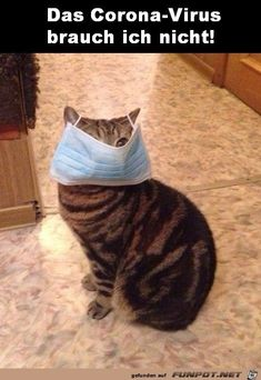 Take a break from the daily grind and watch a few funny pet gifs to get a chuckle and quite possibly make your day a little better! Cute Cats, Funny Cats, Funny Animals, Funny Video Memes, Funny Relatable Memes, Flu Epidemic, Kinds Of Cats, Funny Cat Pictures, Stupid Funny