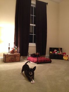 Dog Bedroom On Pinterest Dog Rooms Dog Room Design And Dog Bunk Beds