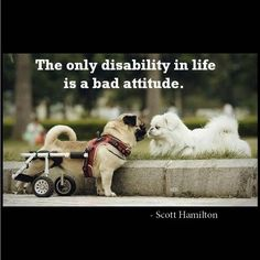 The only disability in life is a bad attitude. Inspirational quote by Scott Hamilton Disability Quotes, Disability Awareness, Attitude Is Everything, Out Of The Closet, Motivational Pictures, Inspirational Quotes, Positive Attitude, Positive Mind, Pugs