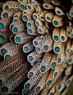 Color - colour inspiration - Feathers of male Bornean Peacock Pheasant Patterns In Nature, Textures Patterns, Color Patterns, Nature Pattern, Organic Patterns, Art Patterns, Henna Patterns, Fotografia Macro, In Natura