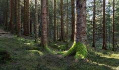 Forest Shadows by Eirik Sørstrømmen on 500px