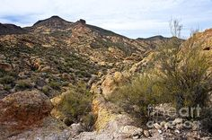 Dressed In Yellow Apache Trail Photograph by Lee Craig - Dressed In Yellow Apache Trail Fine Art Prints and Posters for Sale