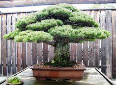 Nämä 15 upeaa puuta paljastavat, miten ihmeellinen maapallomme on | Vivas
