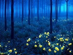 Esas flores brillan como luciérnagas en una noche oscura sin estrellas y en la que la luna se avergüenza y no sale