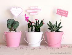 Valentine's Day is just around the corner so if you're running out of time, these quick and easy DIY Valentine gifts will work for you! Teacher Valentine, Teacher Gifts, Valentine Day Gifts, Diy Valentine, Crafts To Make And Sell, Easy Diy Crafts, Succulent Gifts, Succulent Planters, Succulents