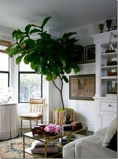 Driven By Décor: My New Succulents and Fiddle Leaf Fig Tree (and the master plan for keeping them alive...)