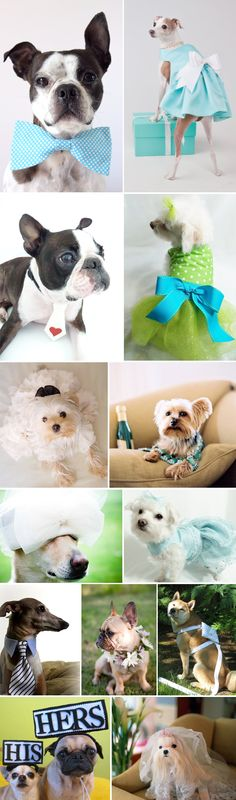 Dogs in weddings  dog attire costume dress tux for wedding  pic picture photo