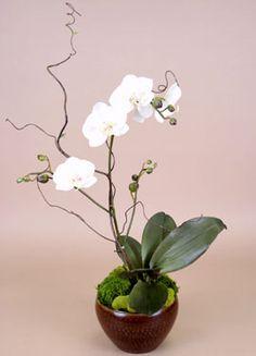 Succulents and Florals | Plantscapers