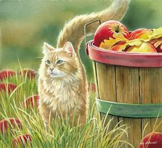 "Susan Bourdet Original Watercolor Painting:""Cat and Apple Basket"" Artist: Susan Bourdet Title: Cat and Apple Basket Size: x Edition: Original Artwork Medium: Watercolor About the Art:. Watercolor Cat, Watercolor Animals, Watercolor Paintings, Cat Paintings, I Love Cats, Cute Cats, Illustrations, Pretty Cats, Cat Drawing"