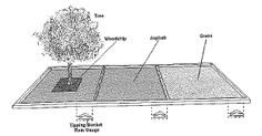 The findings of this research therefore suggest that urban tree units can greatly reduce surface water runoff. The reduction of surface water runoff is not solely due to interception by the canopy but also to the presence of the tree pit in to which much of the rainfall drains. Though the grass almost totally eliminated runoff from its area due to infiltration, our trees actually reduced runoff more in relation to their canopy crown area.