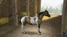 Horse Markings - D A R U M A  F I E L D S  S A D D L E R Y