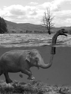 elephant loch ness monster! Probably photoshopped but still cute lol