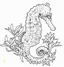 Realistic Seahorse Clipart Black And White Google Search Horse Coloring Pages Horse Coloring Black And White Google