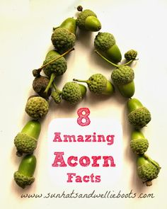 8 Amazing Acorn Facts from Sun Hats and Wellie Boots