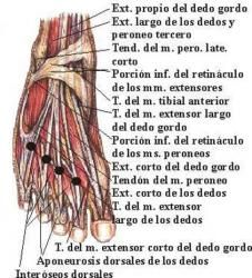 Reflexiología podal - Monografias.com Reflexology Massage, Physical Therapy, Medicine, Healthy Bodies, Healthy Drinks, Massage, Grief, Remedies, Exercises
