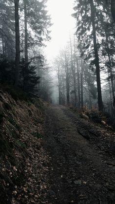 Forest. Fogg...