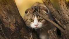 cat climbed tree on prowl wide hd wallpaper